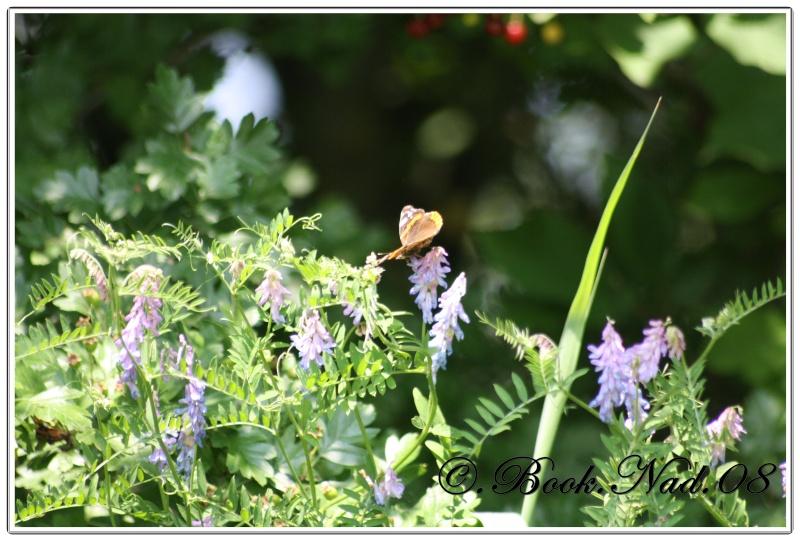 Les papillons. - Page 3 Cadrer21