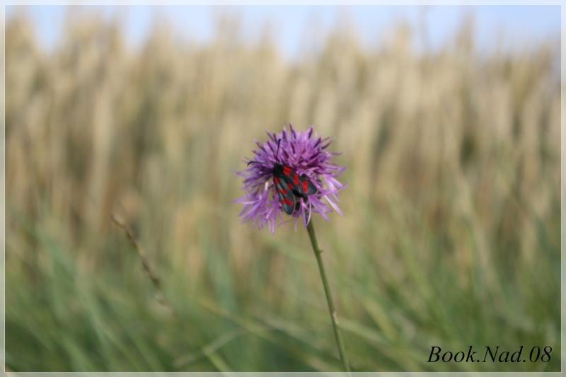 Les papillons. - Page 3 Photoc33