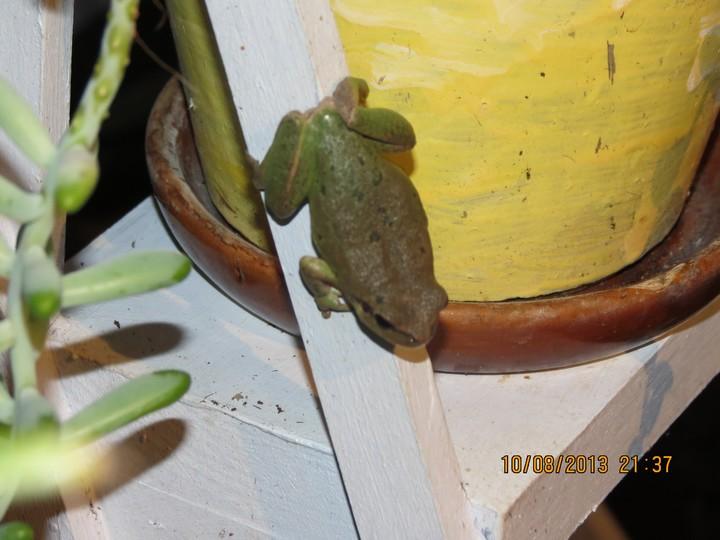 grenouilles  Img_6215
