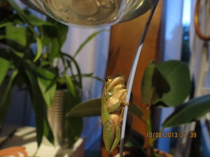 grenouilles  Img_6220