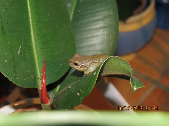 grenouilles  Img_6221
