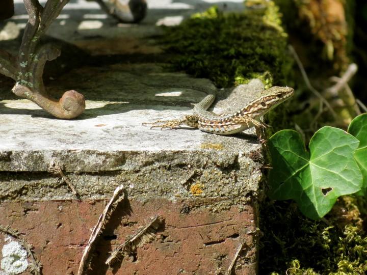 mes photos d'animaux de l'été Img_6222
