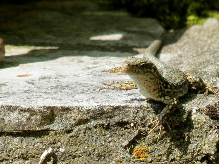 mes photos d'animaux de l'été Img_6223