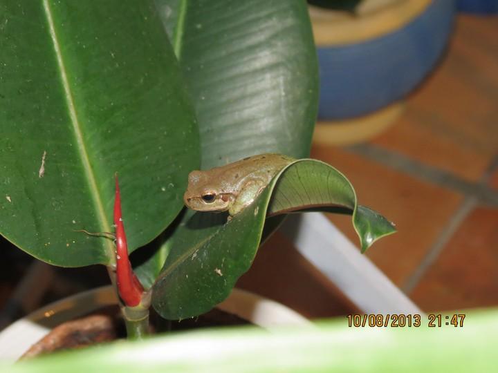 grenouilles  Img_6324