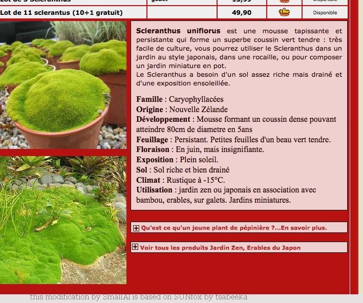 scléranthus uniflorus Mousse11