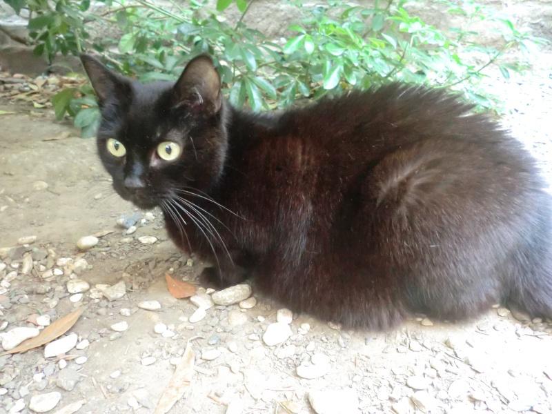 MIKO  jolie chatte noire 4 fractures du bassin a l'adoption - Page 3 Miko410