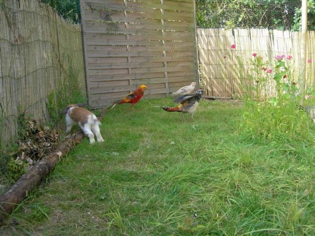 les poules en batterties Dscn3310