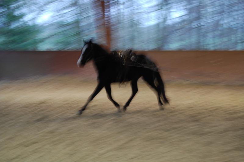 Le jeune cheval... Asmun_10