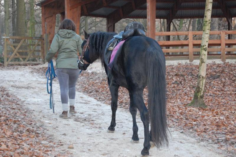 Le jeune cheval... Asmun_11
