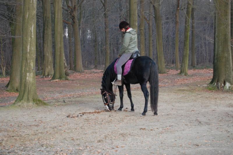 Le jeune cheval... Asmun_12