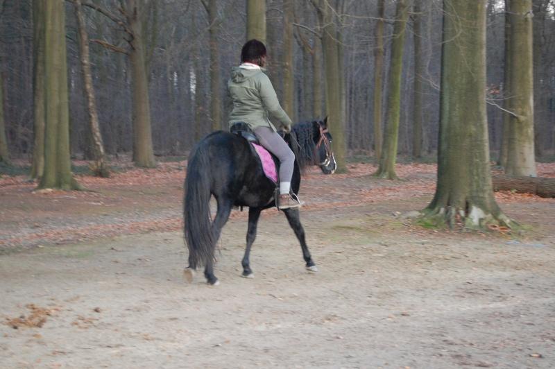 Le jeune cheval... Asmun_13
