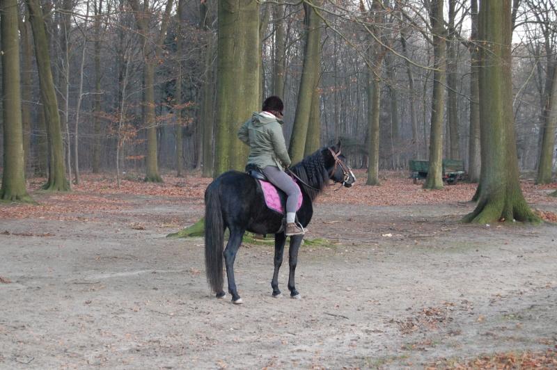 Le jeune cheval... Asmun_14