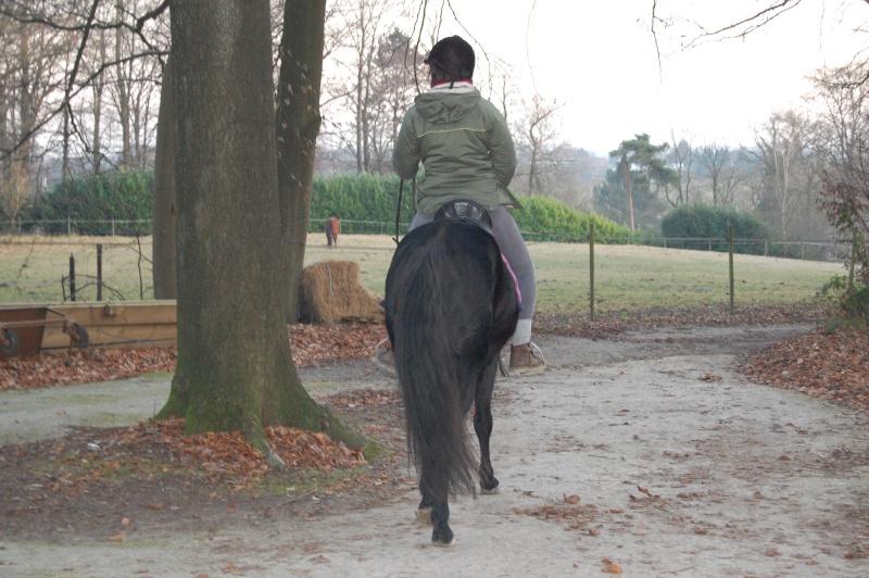 Le jeune cheval... Asmun_15