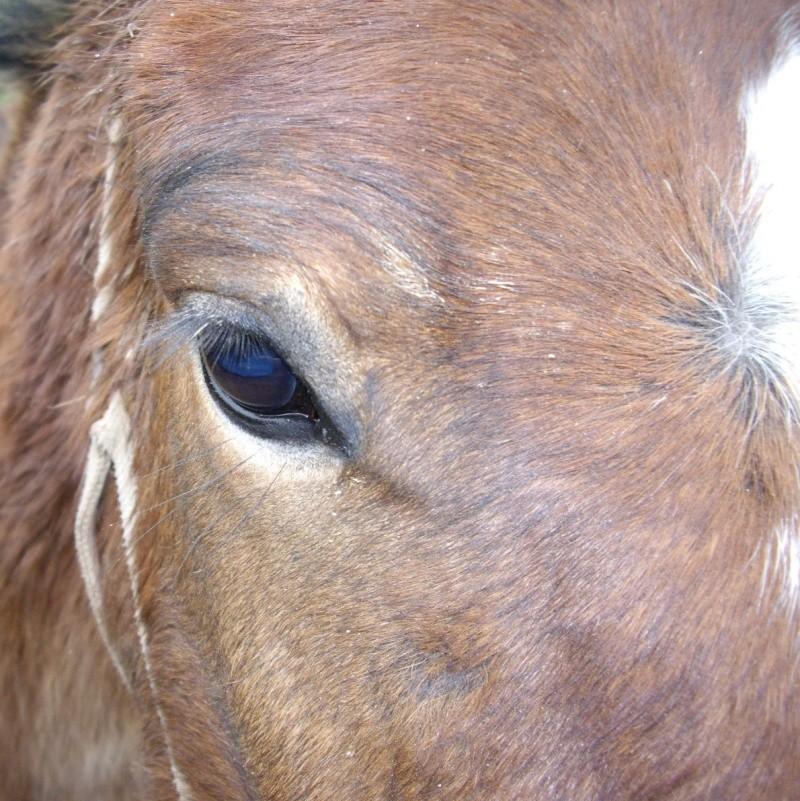 SAFRAN  - ONC Poney né en 2006 - adopté en octobre 2009 par Jean-Claude - Page 3 Imgp1424