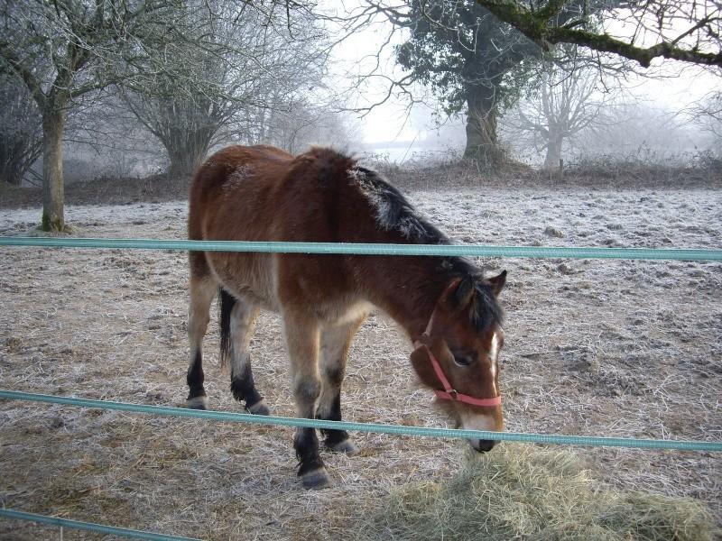 SAFRAN  - ONC Poney né en 2006 - adopté en octobre 2009 par Jean-Claude - Page 3 Imgp1815