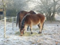 Rescued /Rehomed Ponies and donkeys
