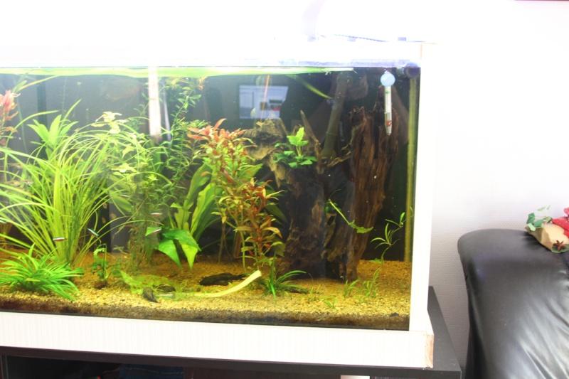 ptite question plante Img_7710