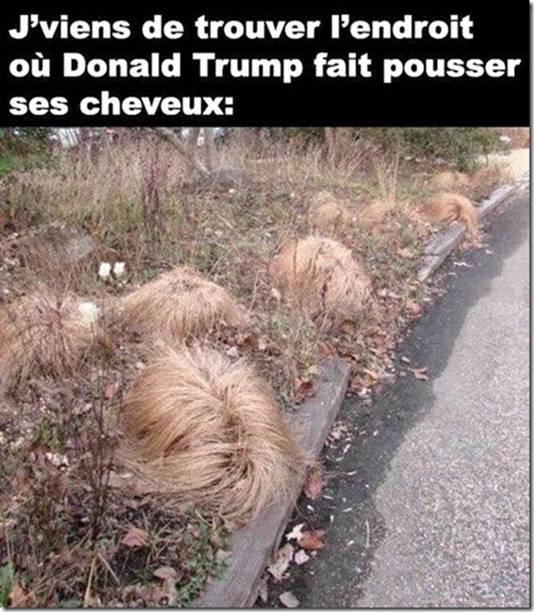 Les cheveux de Trump... Cheveu10