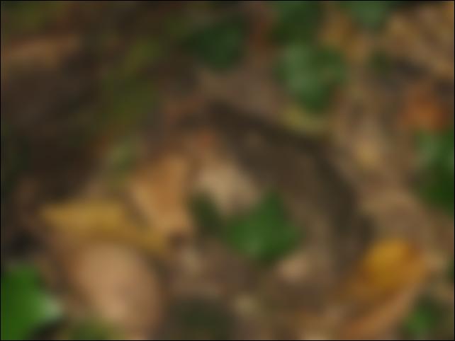 [Jeu] Les photos déformées Gggggg10