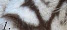 A qui appartient cette fourrure ou ces plumes/écailles ? Pppppp10