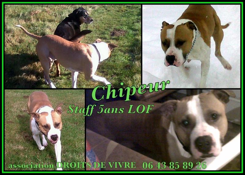 Chiper STAFF LOF 5 ans Downlo10