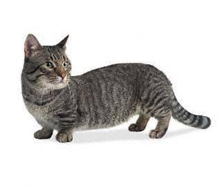 Neke druge kuce (i mace) Munchk15