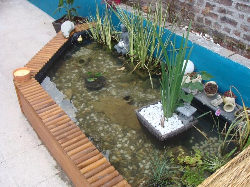 mon bassin sur la terrase pour boire un verre au pres des carpe koii Dsc01814