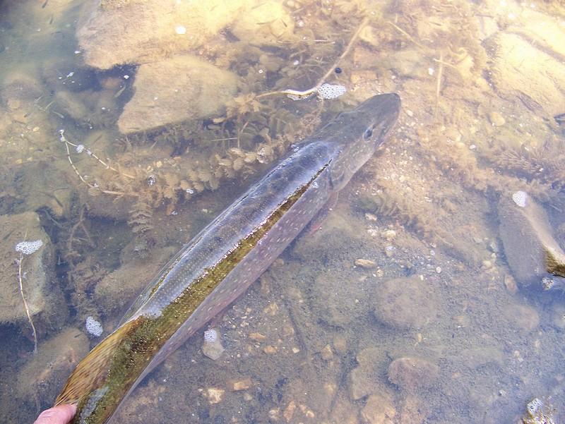 Pêche sur le gardon 100_4118