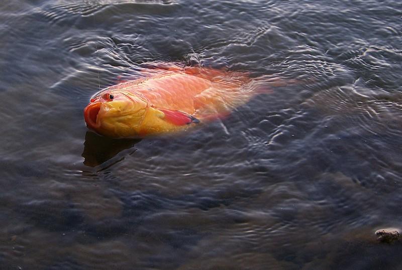 Pêche sur le gardon 100_4125