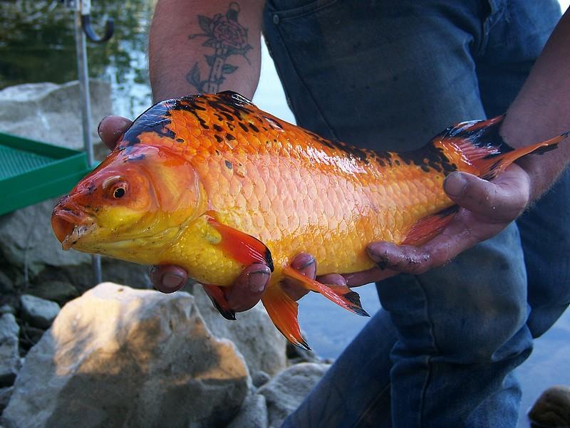 Pêche sur le gardon 100_4128