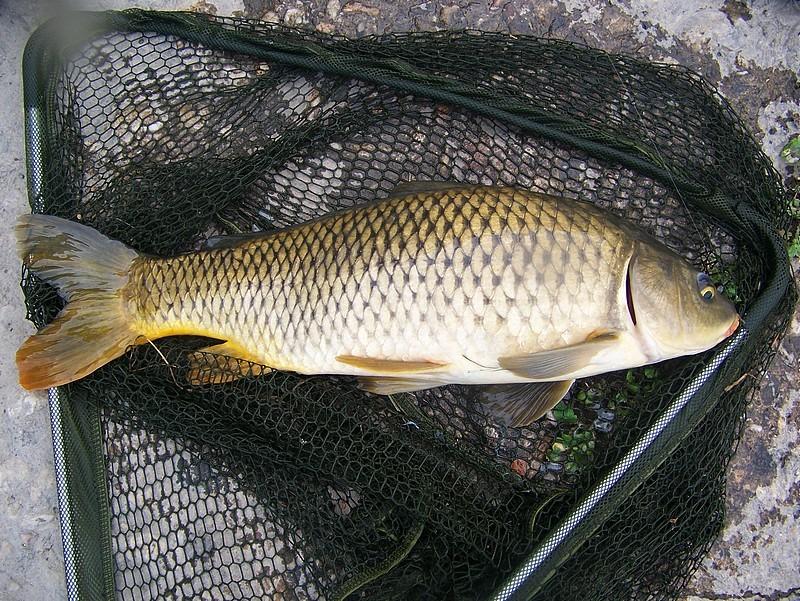 Pêche sur le gardon 100_4216