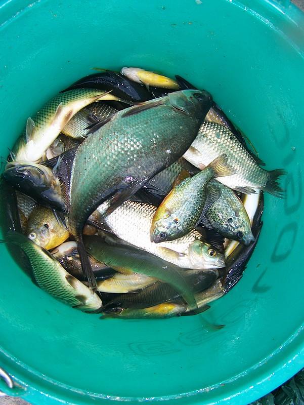 Pêche sur le gardon 100_4217
