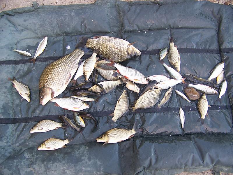 Pêche sur le gardon 100_4233