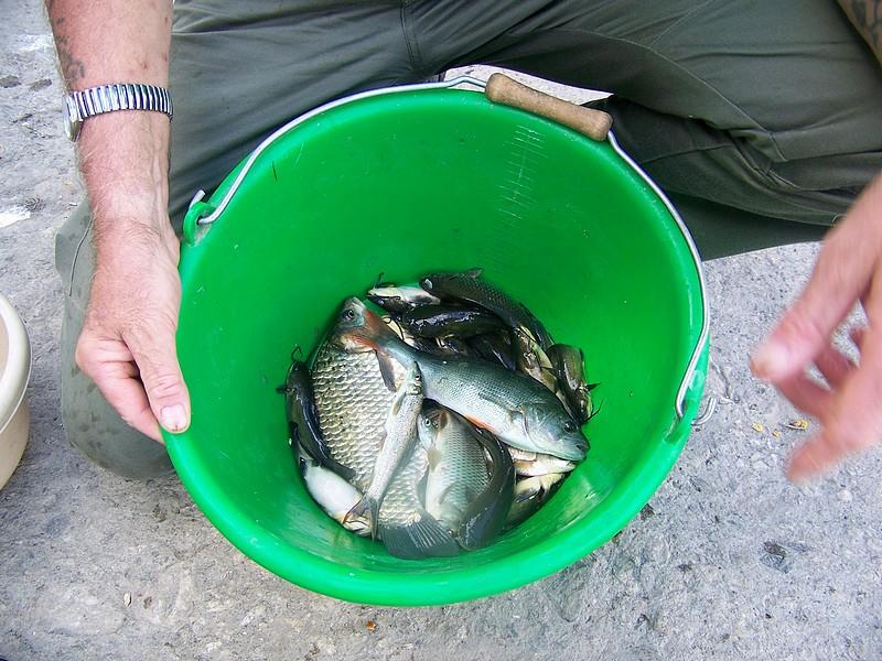 Pêche sur le gardon 100_4244