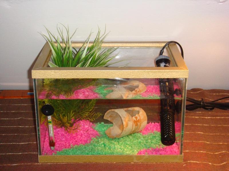 Mon aquarium fini :) Dsc02410