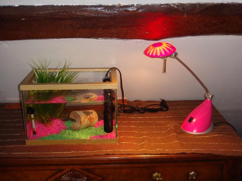 Mon aquarium fini :) Dsc02411