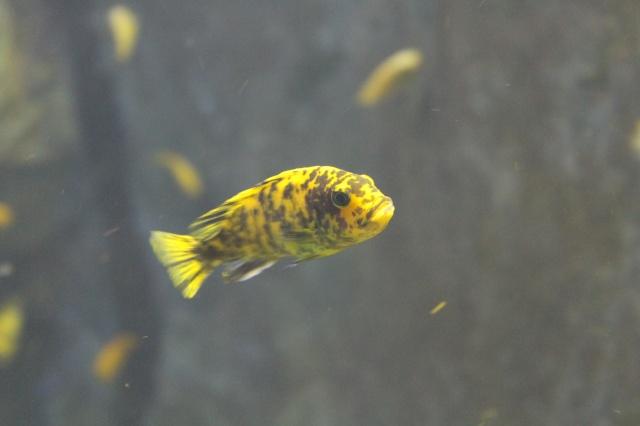 Aquarium de Lyon 13_03_14