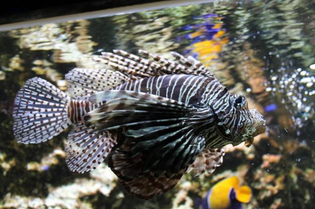 Aquarium de Lyon 13_03_22