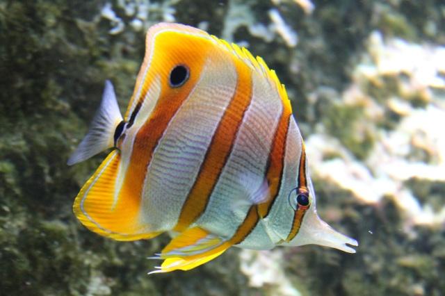 Aquarium de Lyon 13_03_24