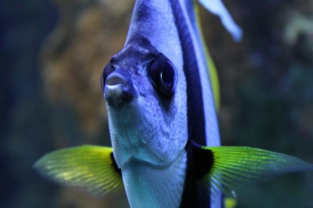 Aquarium de Lyon 13_03_25