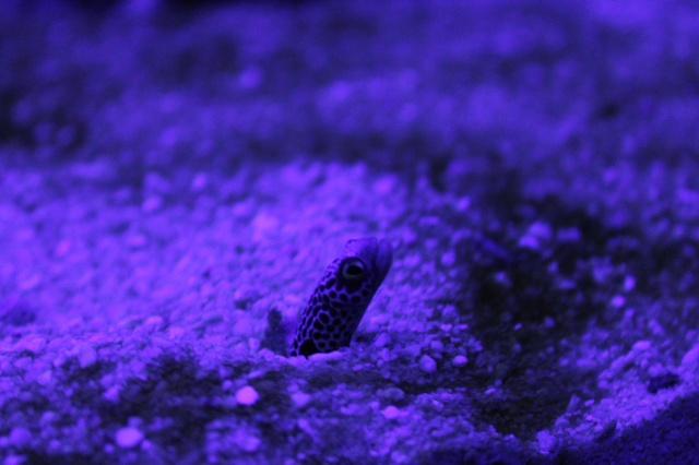 Aquarium de Lyon 13_03_27