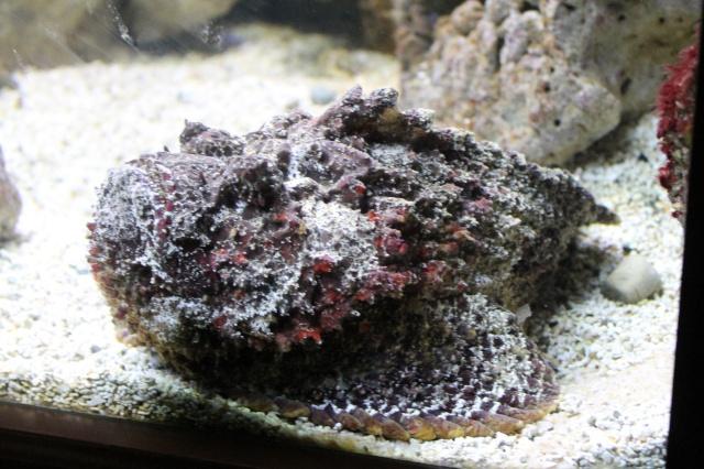 Aquarium de Lyon 13_03_30