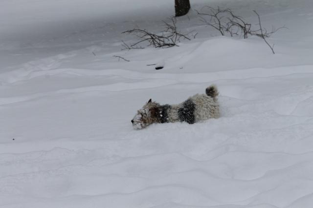 une journée de neige Img_0113