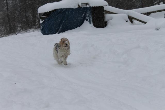 une journée de neige Img_0211