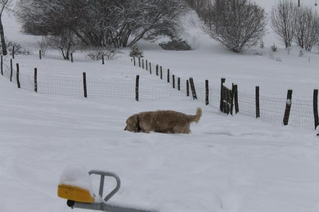 une journée de neige Img_0212