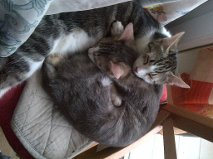 Tempête et Tsarine, 6 mois Alyss_11