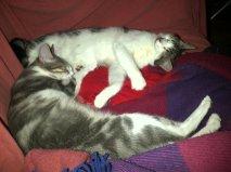 Tempête et Tsarine, 6 mois Alyss_14