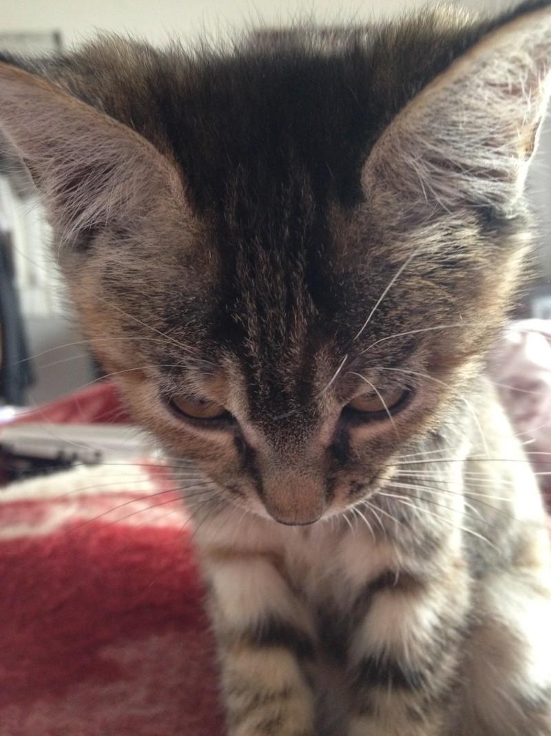 Boubou - chatte chinoise Img_2310