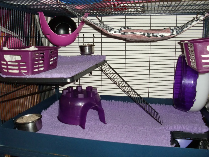 Photos de vos cages - Page 37 Cimg2612
