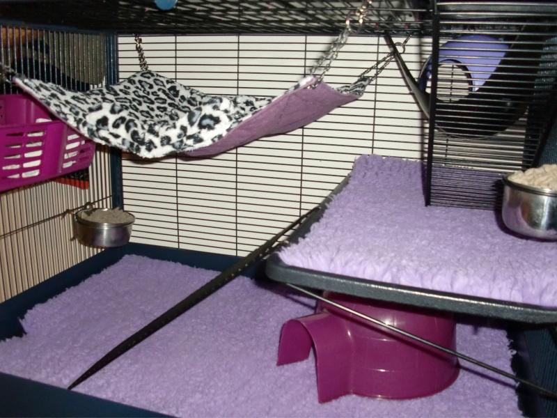 Photos de vos cages - Page 37 Cimg2613